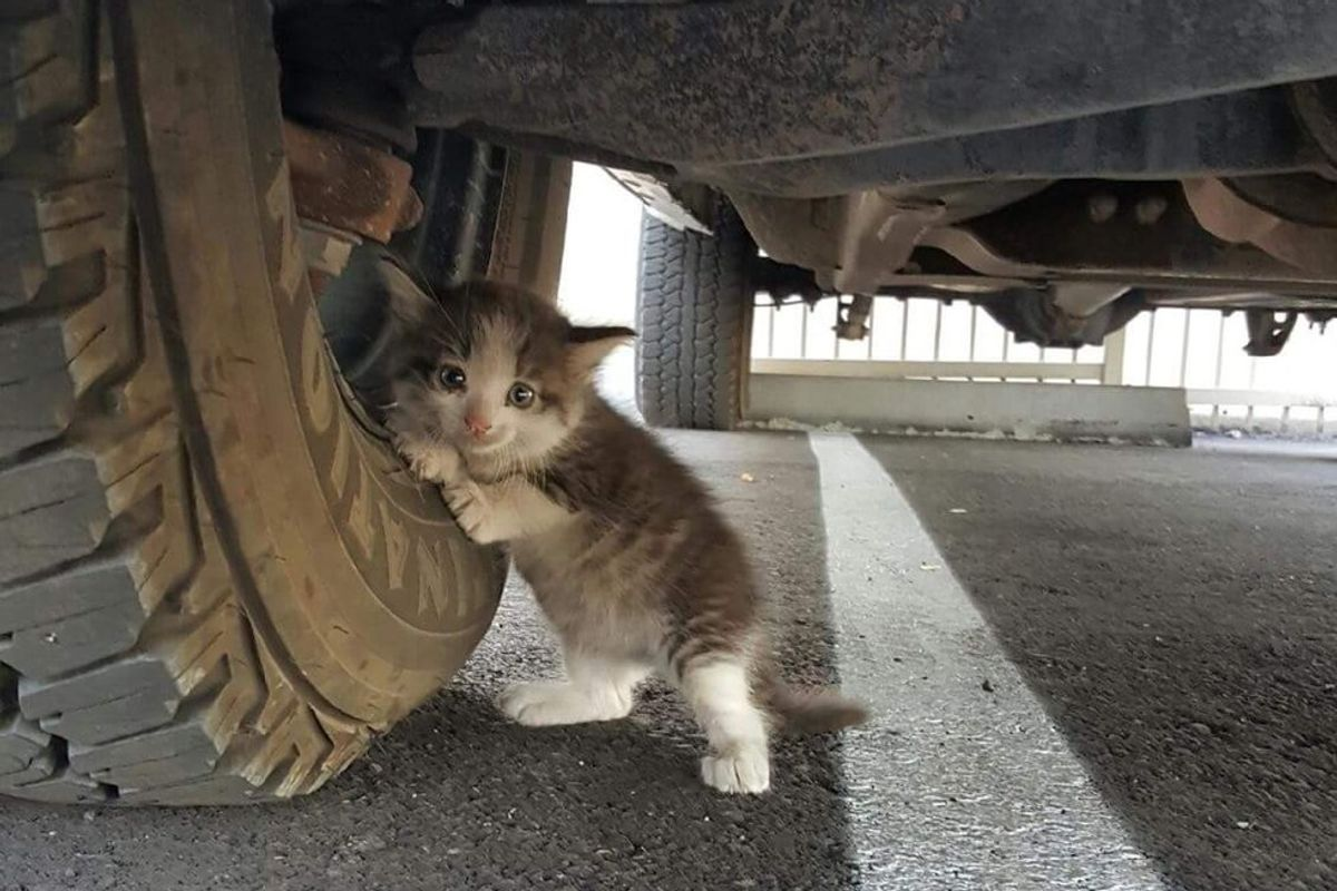 Man Found Stray Kitten Clinging to Truck and Knew He Had to Help..