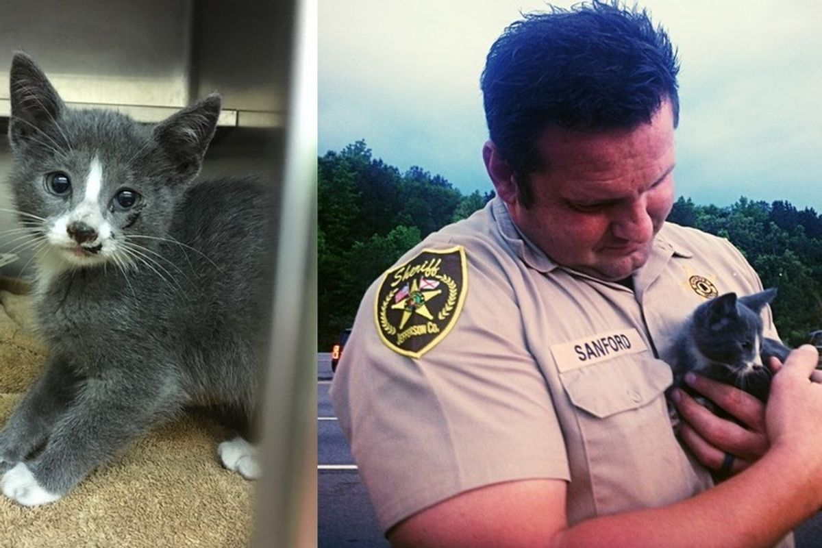 Deputy Saves Furry Stowaway, who Traveled 130 Miles in Family's Car