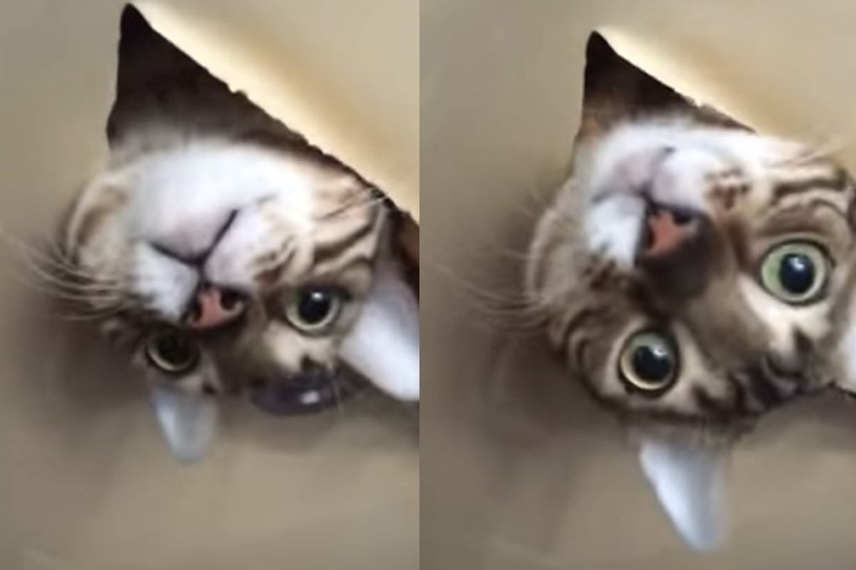She Finds Her Cat in the Ceiling When She Gets Home