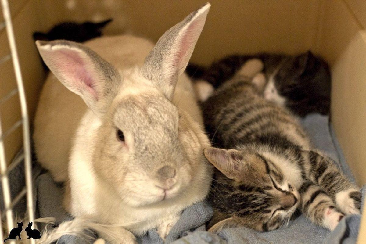 Motherless Kitties Find New 'Dad', a Rabbit Named Marlowe