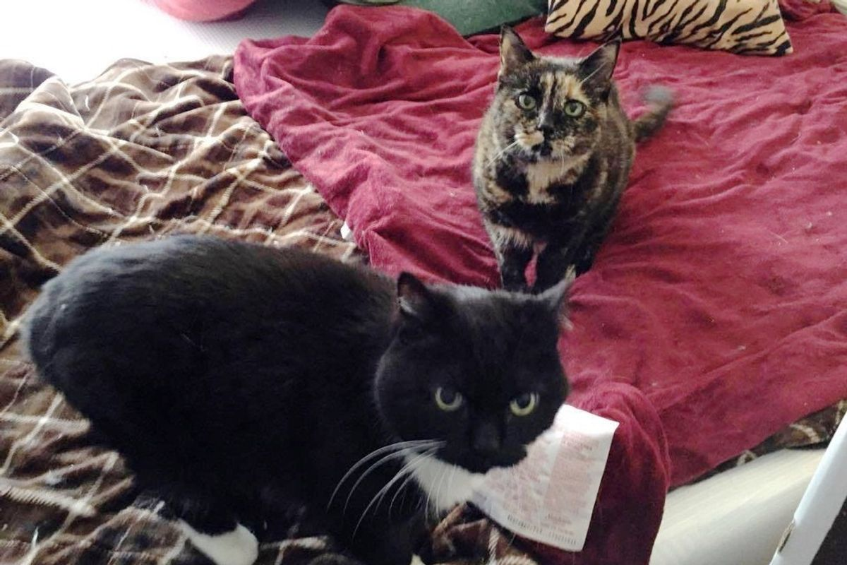 Couple Adopts 18-year-old Cat and Her Brother So They Can Have Their Retirement Together