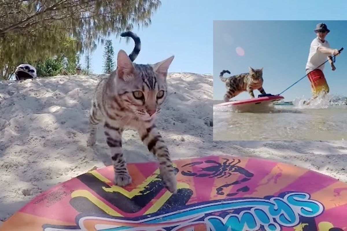 Cat Goes for a Ride on a Skimboard with His Human Dad
