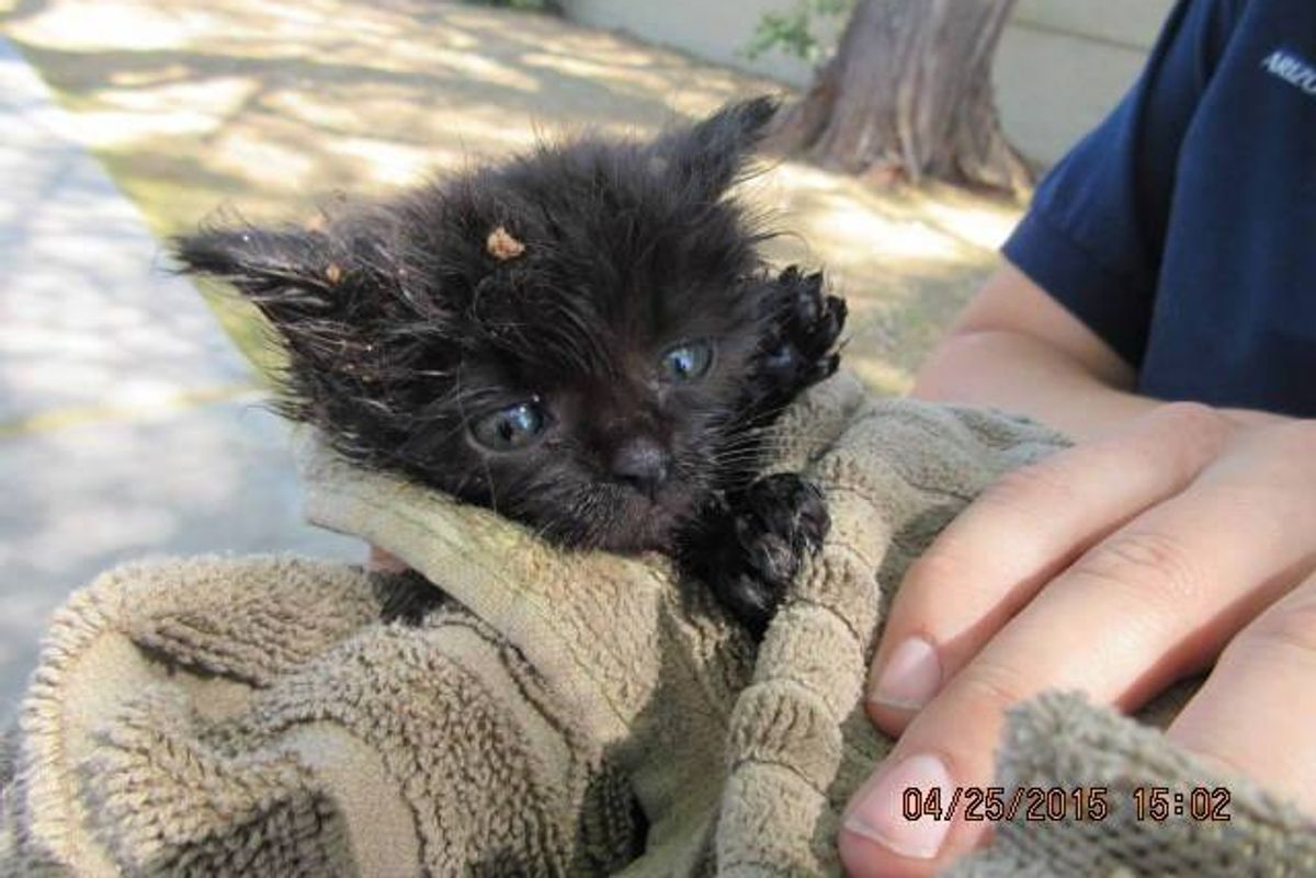 The Joy When They Got This 1-Pound Kitten Out from Underground