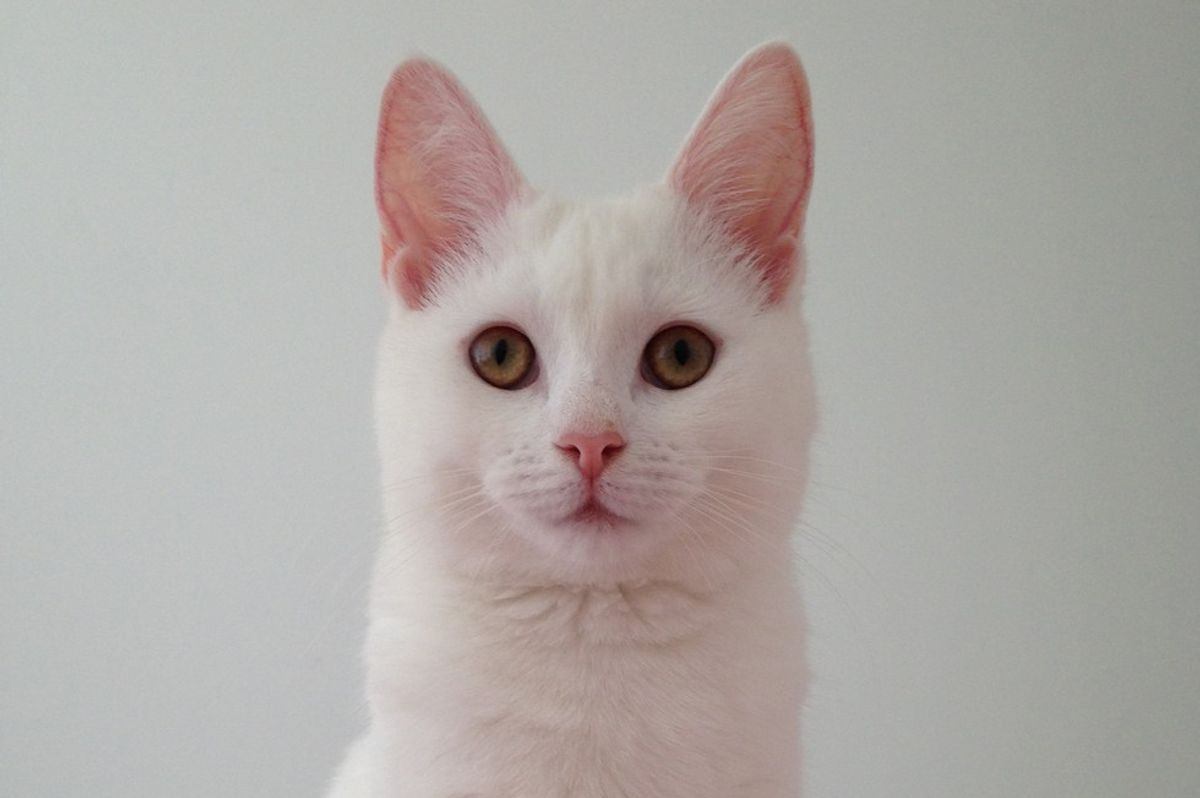 Meet Zappa the cat