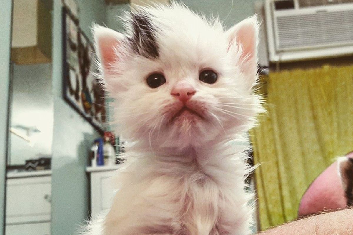 Woman Captures Time-lapse of Her Foster Kitten From Birth to Adoption