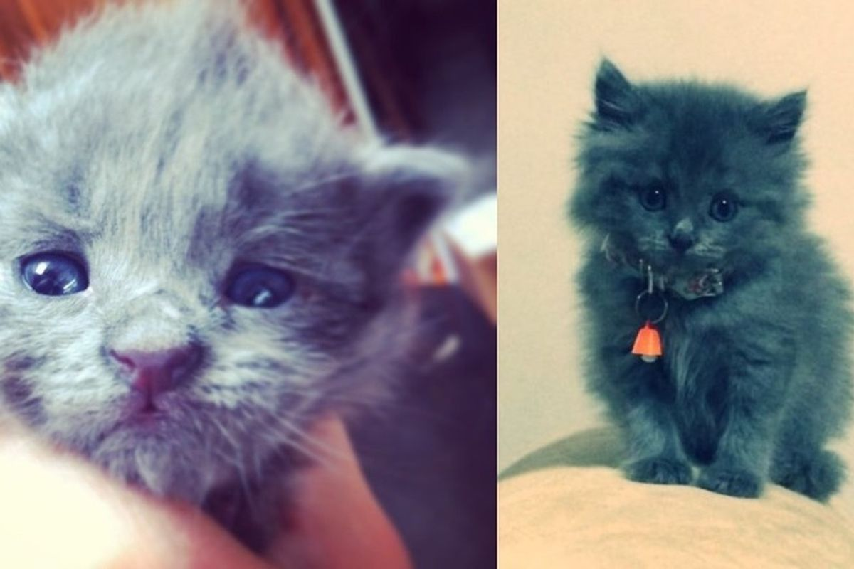 Feral Cat Mother Drops Off Her Kitten at a Family's House...