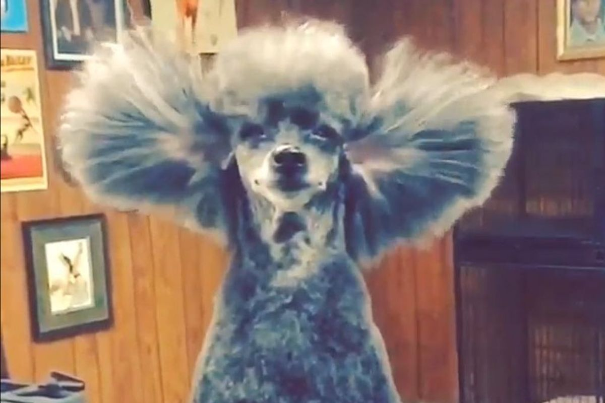 Jess Rona Makes Dog Grooming a Viral Instagram Art Form