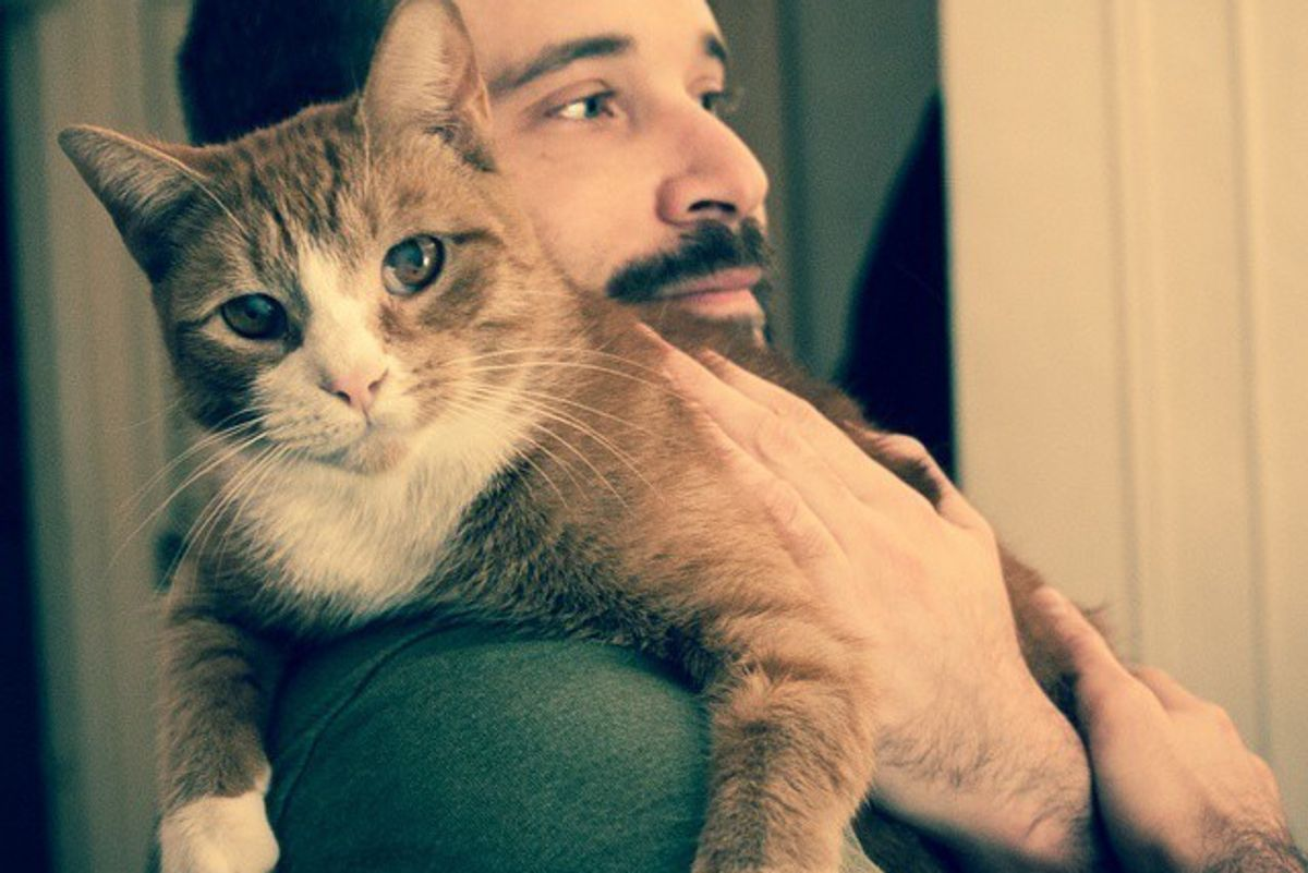 Man Took Cat Out of the Shelter and the Cat Hasn't Stopped Cuddling Him Since
