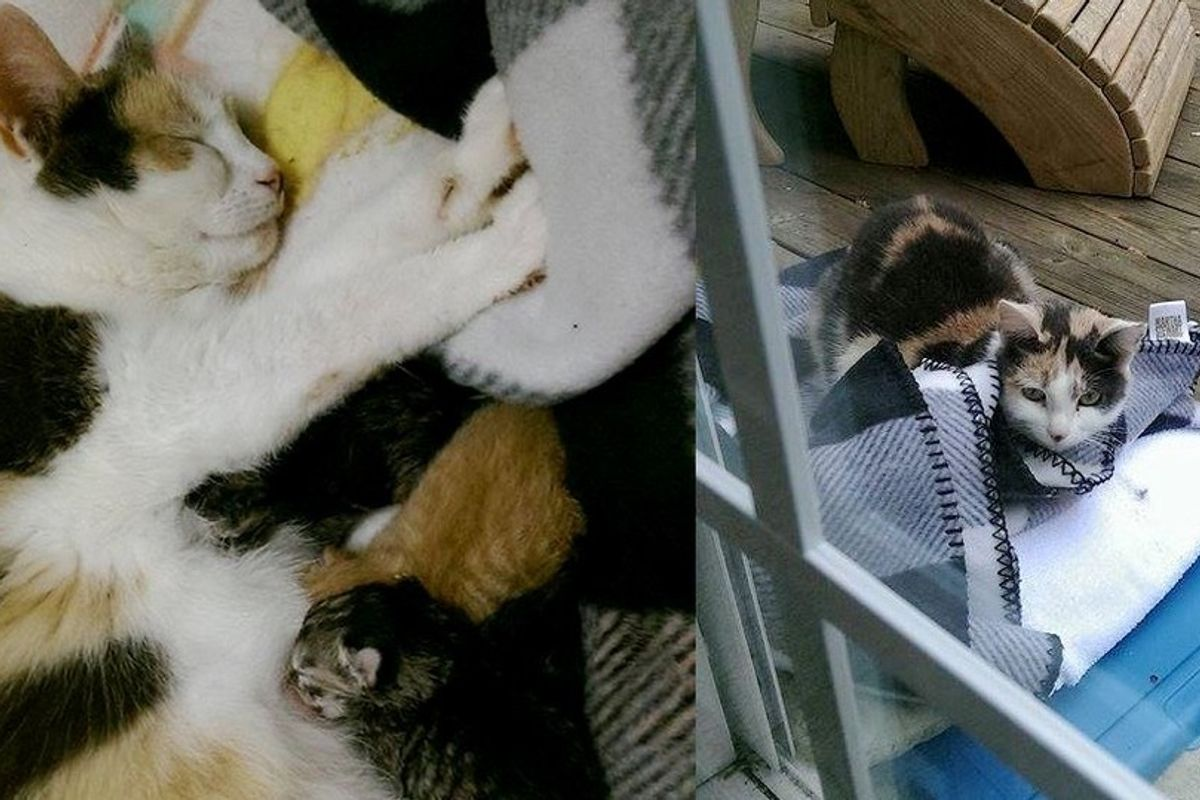 Family Won the Heart of a Stray, the Cat Brought Them 5 Tiny Surprises