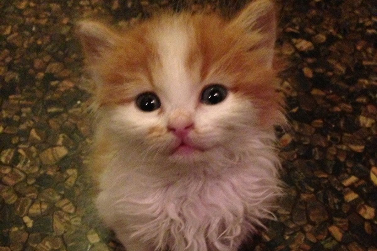 Orphan Kitten Strays Into Man's Life. Now He's Family