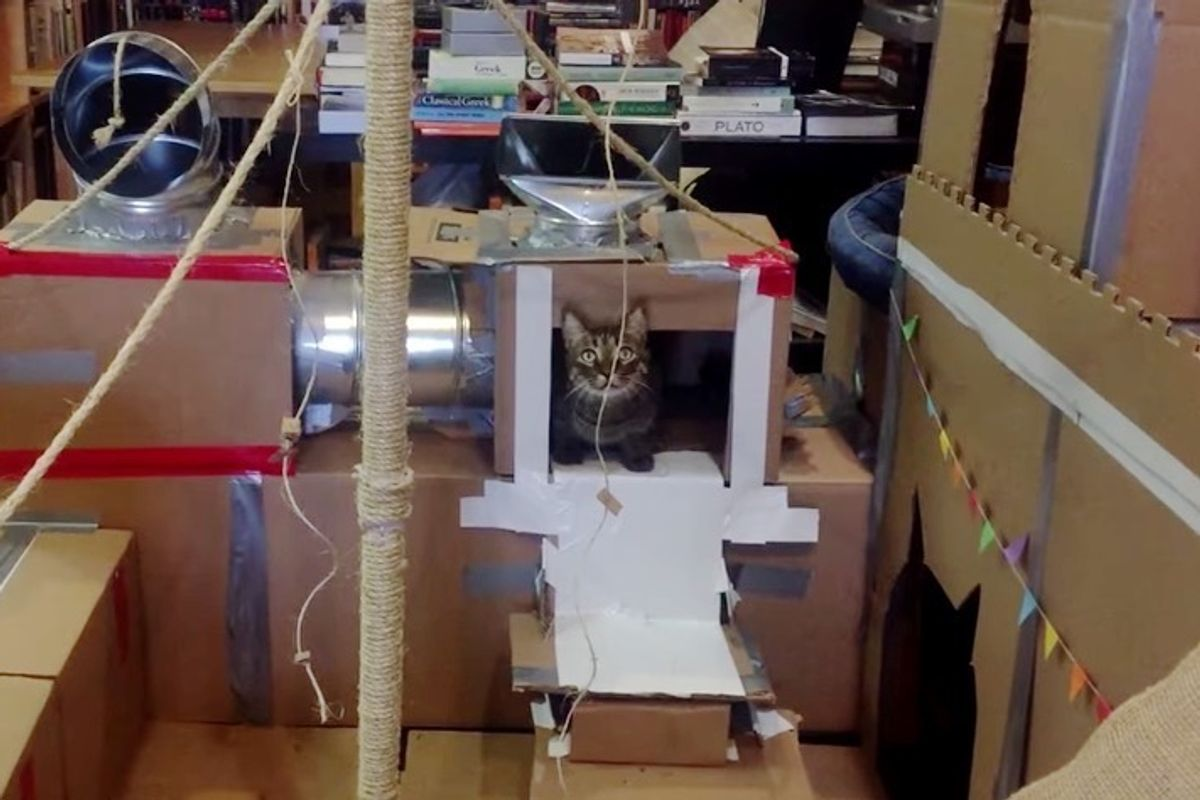 Man Tries to Build the Greatest Cat Fort for His Cat