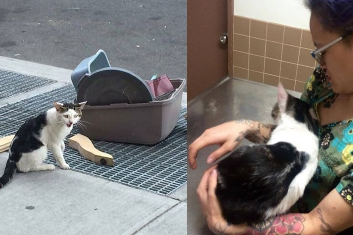 Cat Abandoned Next to His Belongings Finds the Perfect Person to Bring Him to Safety