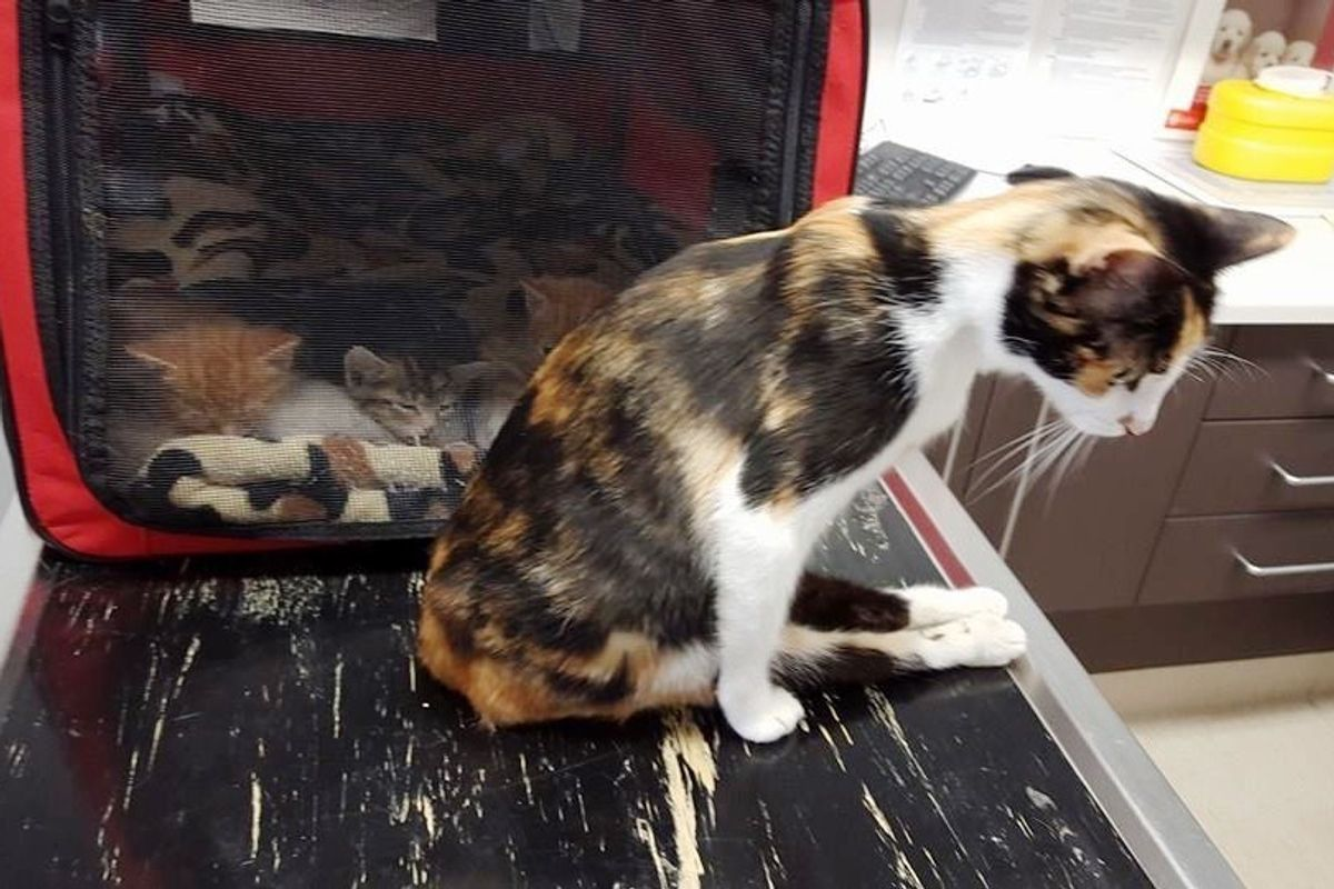 Paralyzed Cat Mom Drags Herself to Her Kittens so She Can Continue Caring for Them