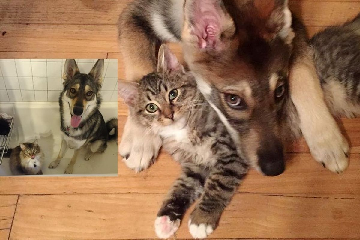 Dog Took Cat Out of Shelter and Becomes His Bodyguard for Life