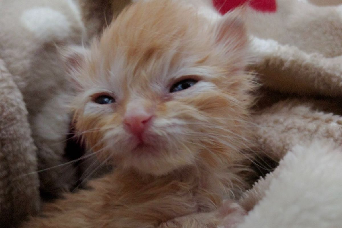 Kitten Goes from Weighing Almost Nothing to Now 5 Ounces!