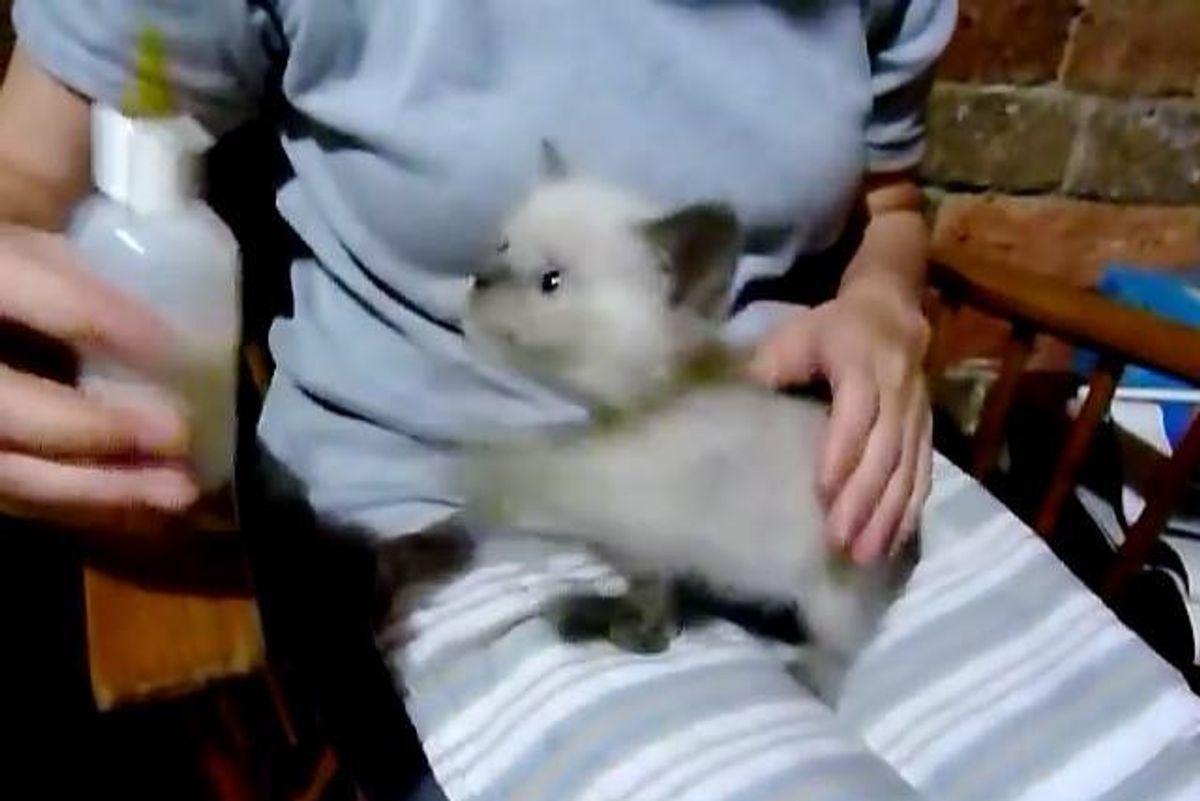 Tiny Kitten Meows Like a Baby Goat When Asking for her Bottle!