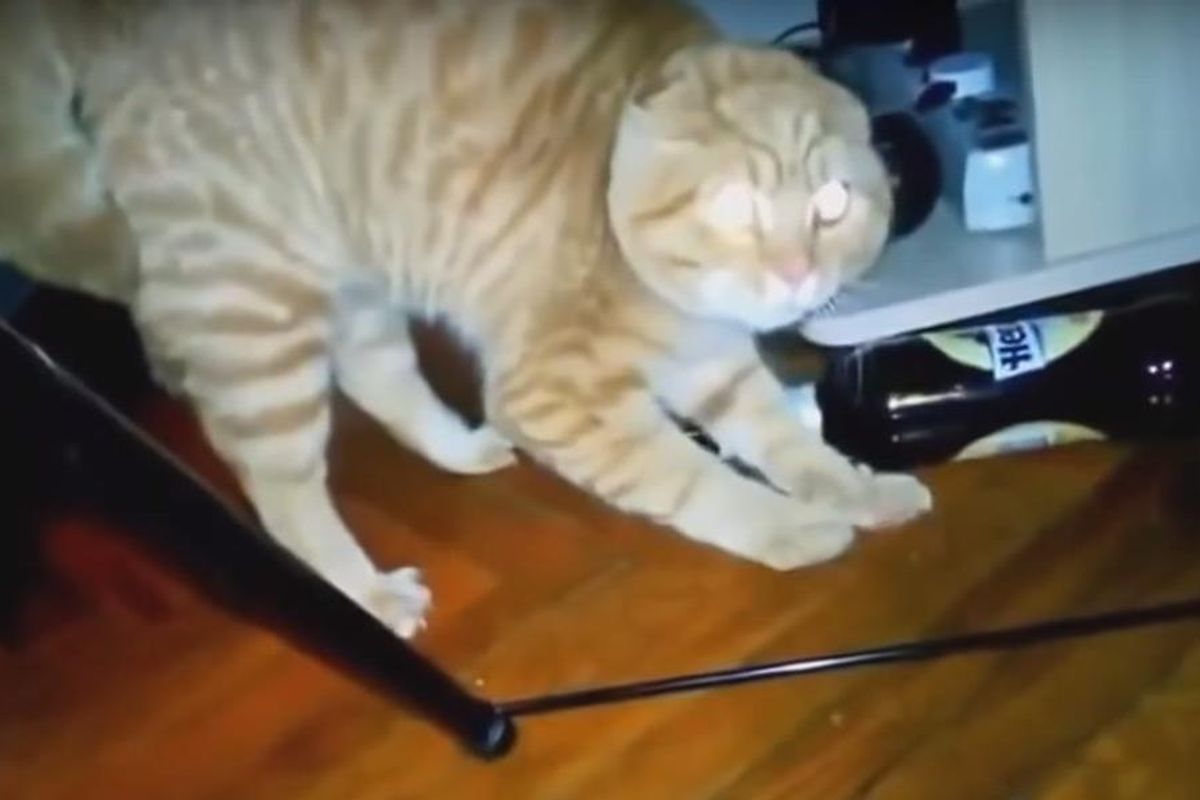 This Video Of Angry Pets Covering Evanescence's 'Bring Me To Life' Will Wake You Up Inside