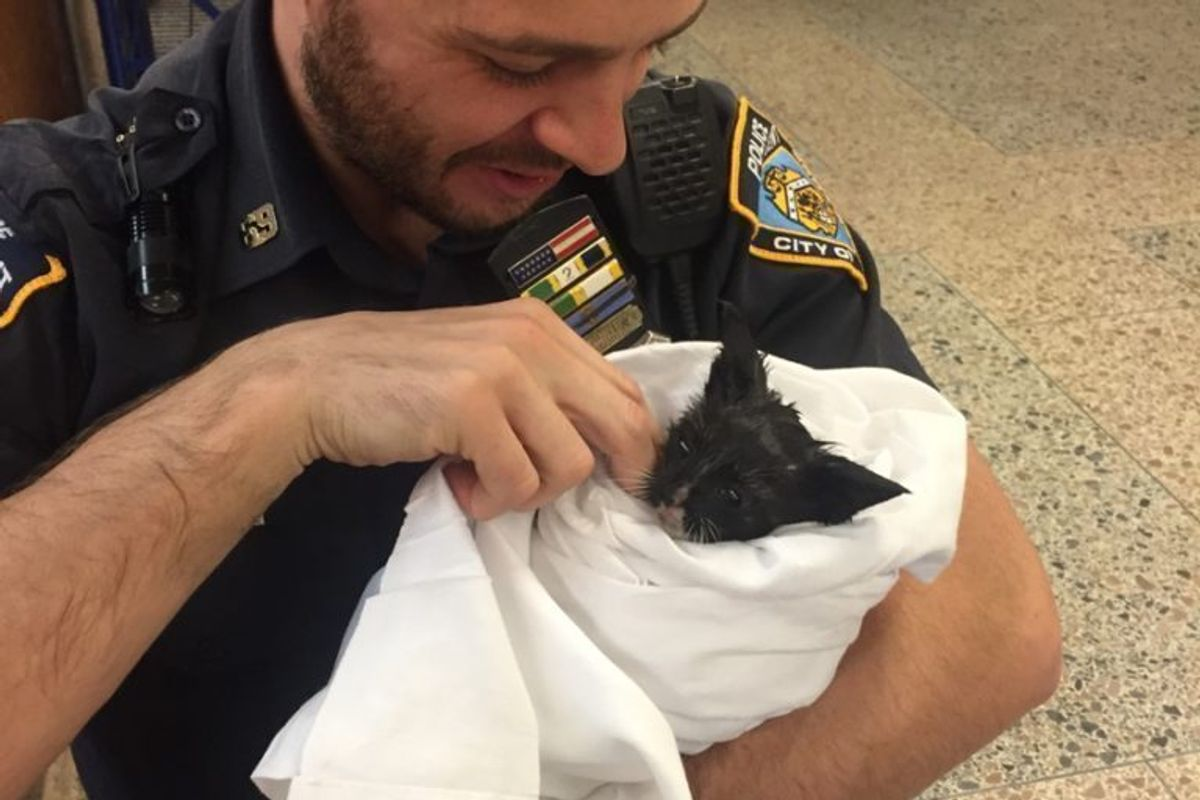 Stray Kitten Gets Some Much-Needed TLC After Being Saved by Officer
