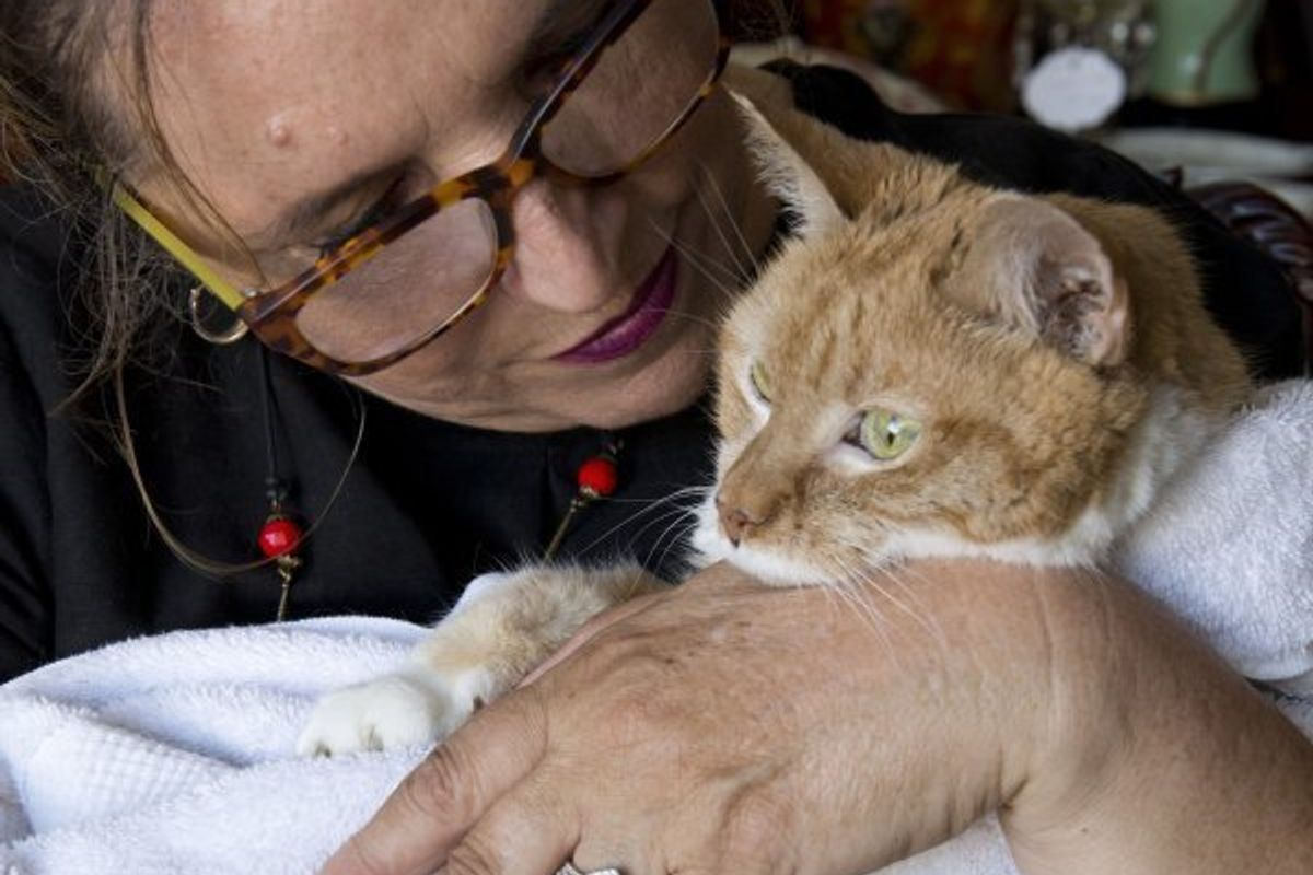 25-year-old Cat Gets Adopted to Live Out the Best of Her Life