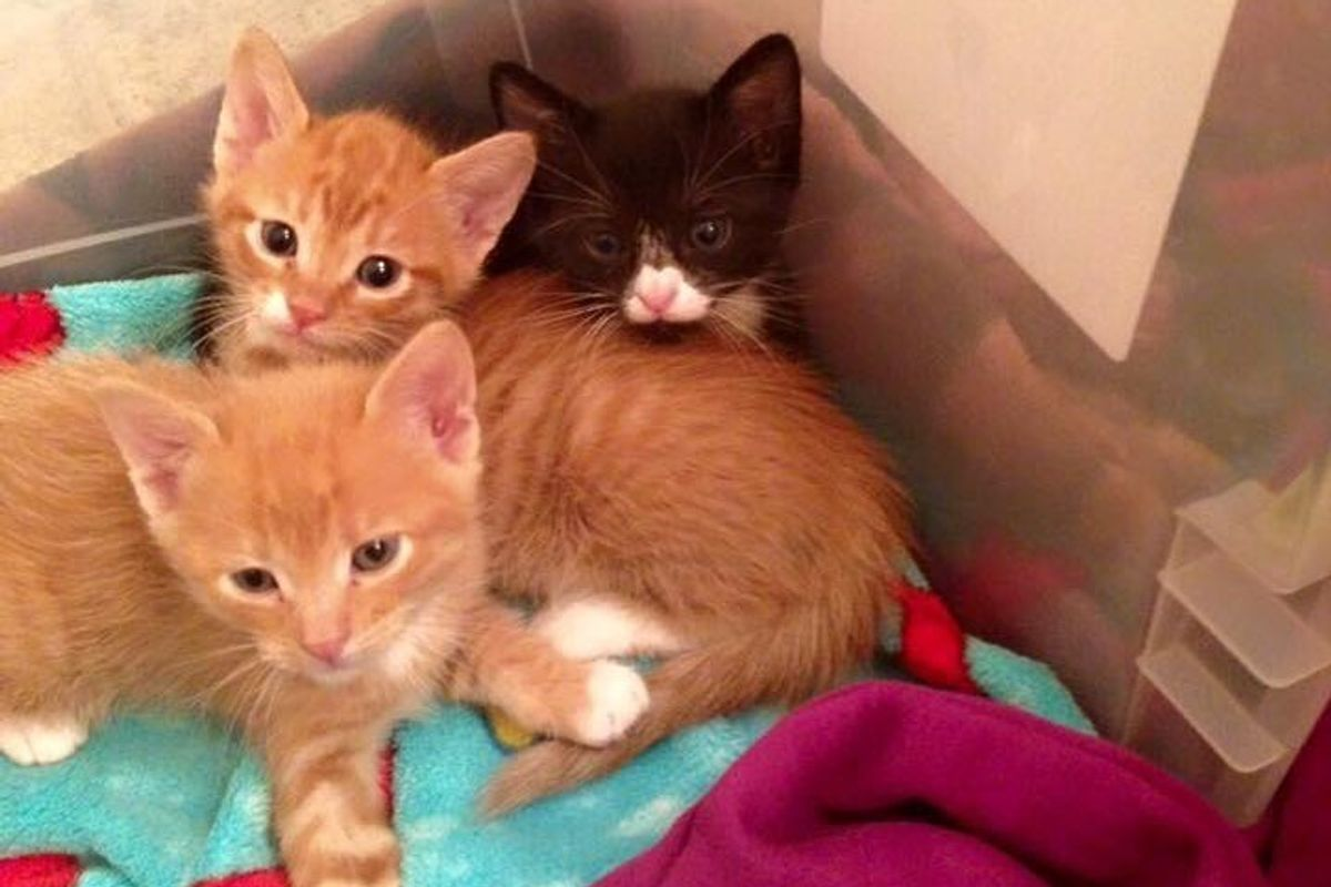 3 Stray Brothers Make Vet Clinic Their Home and Start Caring for Patients