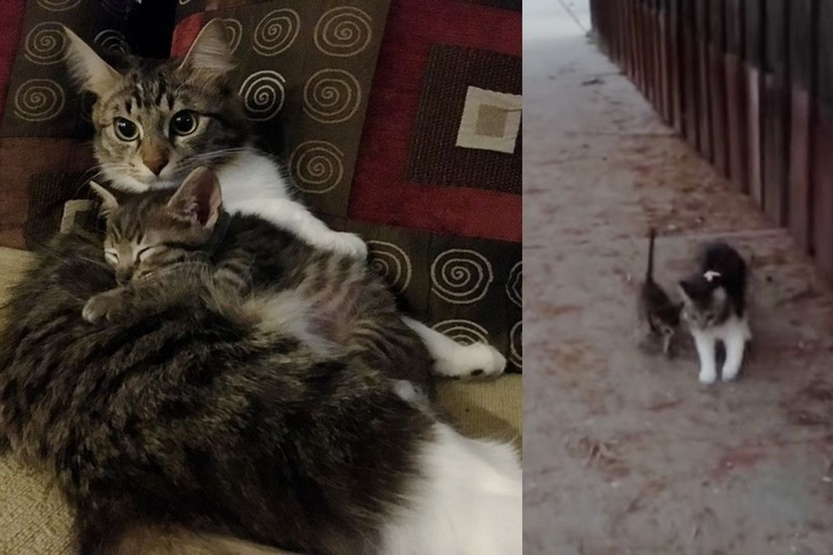 Rescue Cat Guards Foster Kitten and Teaches Him to Walk Just Like Her