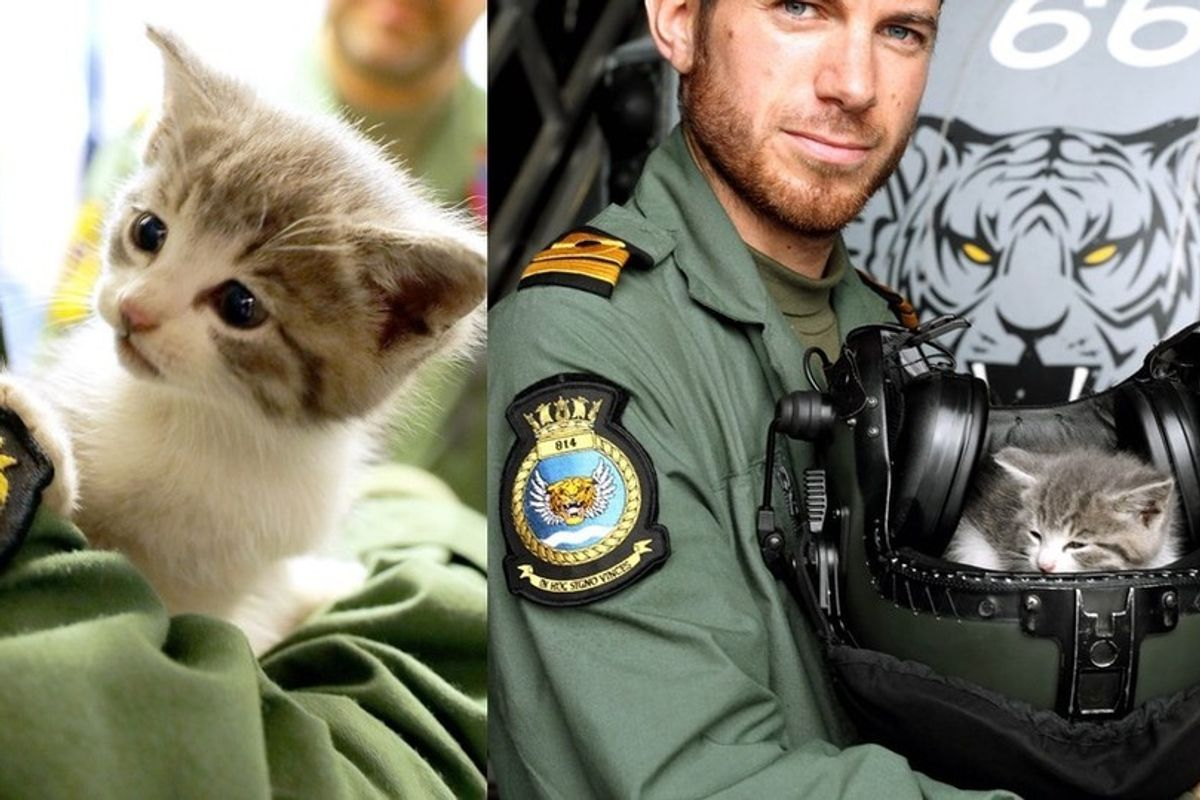 Kitten Travels in Pilot's Car for 300 Miles and Finds His Way into the Navy