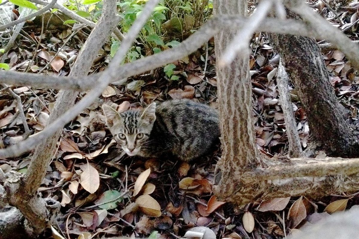 Man Helps Feral Kitten Feel Love and Trust, and Turns His Life Around