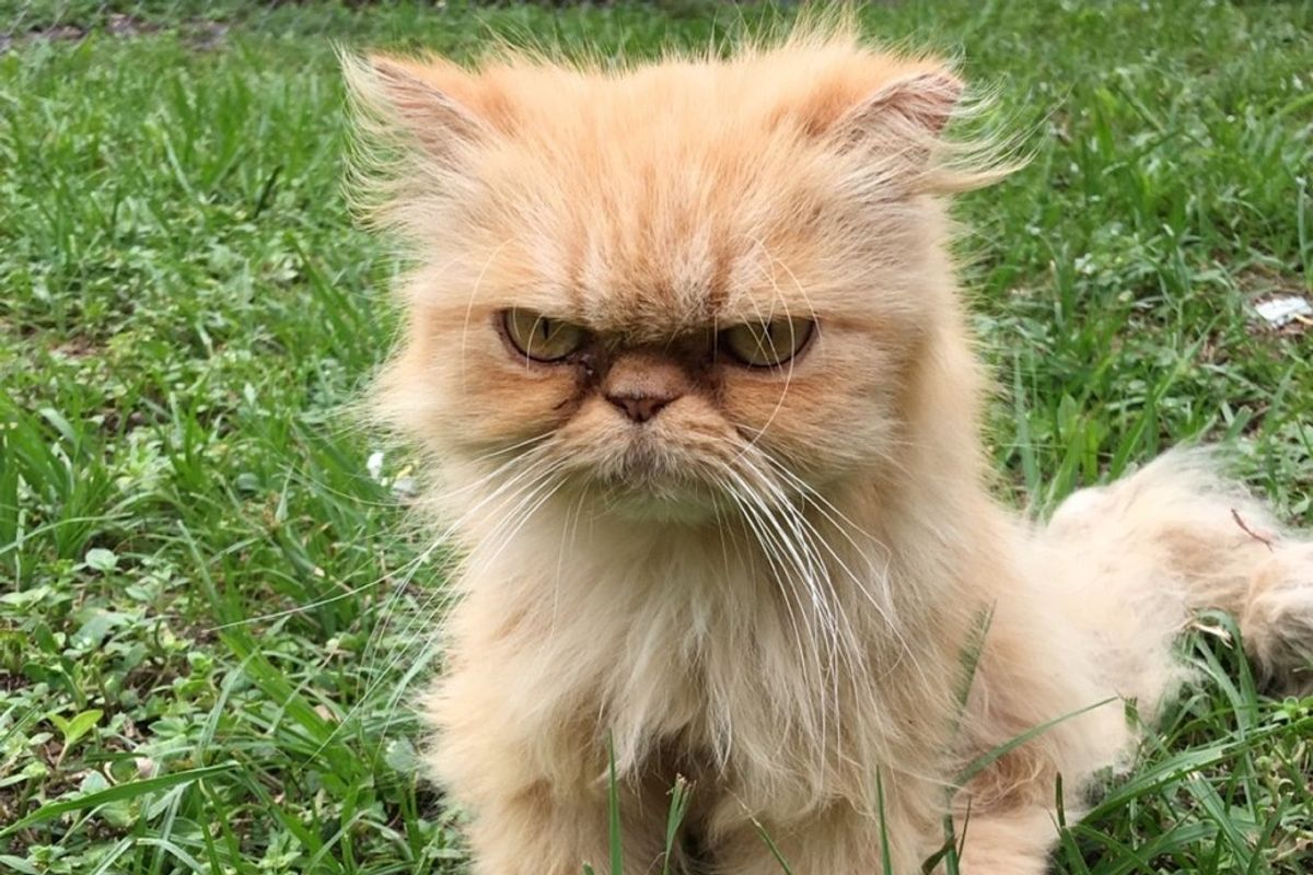Homeless Persian Cat Wanders Up to Man During House Inspection, Meowing for Love