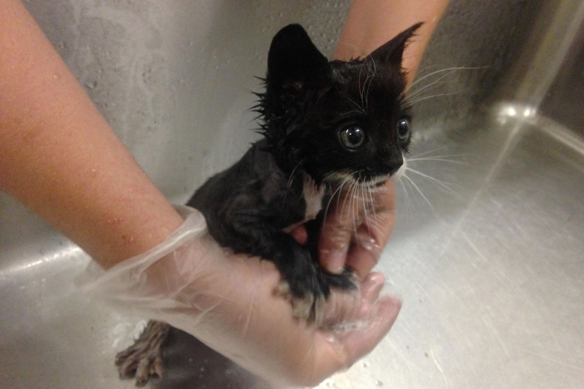 Kitten Rescued from Under a Car Has the Loudest Pipes