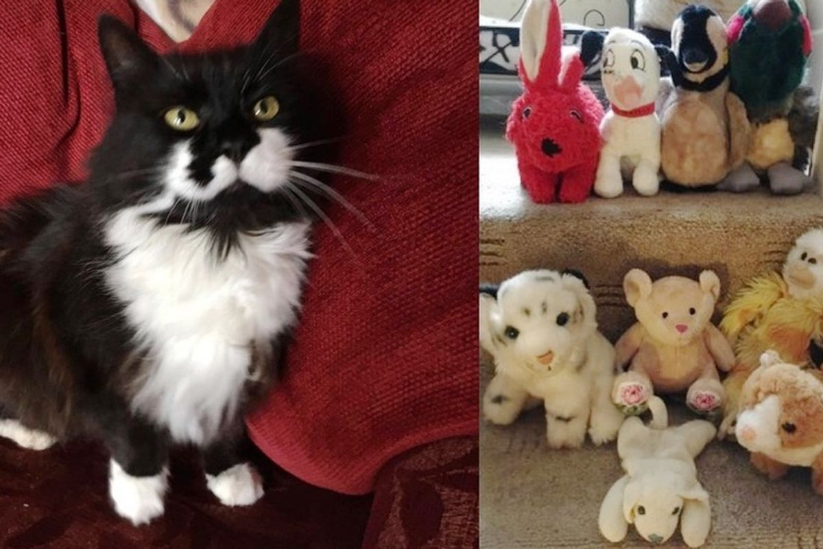 """10-year-old Cat Brings Home """"Gifts"""" She Takes from Neighbors, Most of Them are Cuddly"""