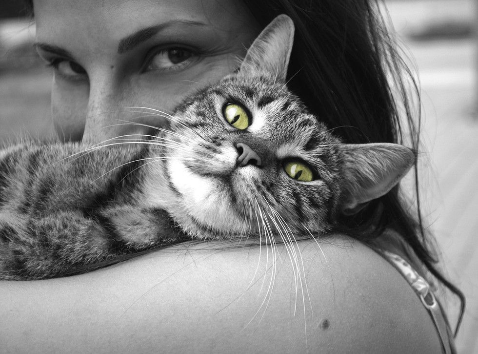 Moods That Your Cat Puts You Through