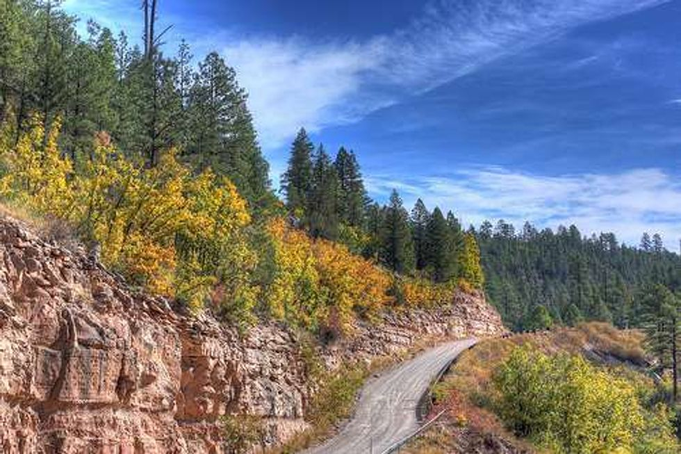 Off-Road Plan Puts Species at Risk in National Forest