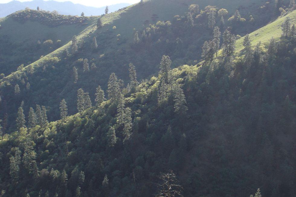 National Roadless Rule Overlooked in Colorado