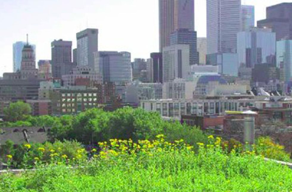 Report Shows Benefits of Green Infrastructure's Impact on Clean Water