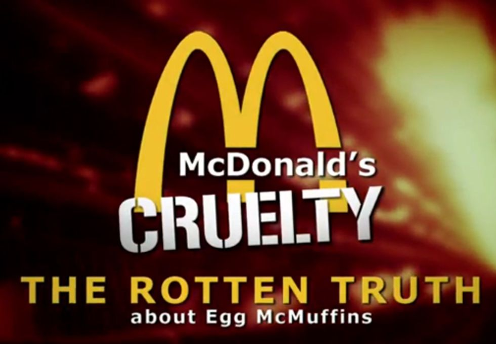 McDonald's Drops Industrial Egg Farm after Cruelty Exposed