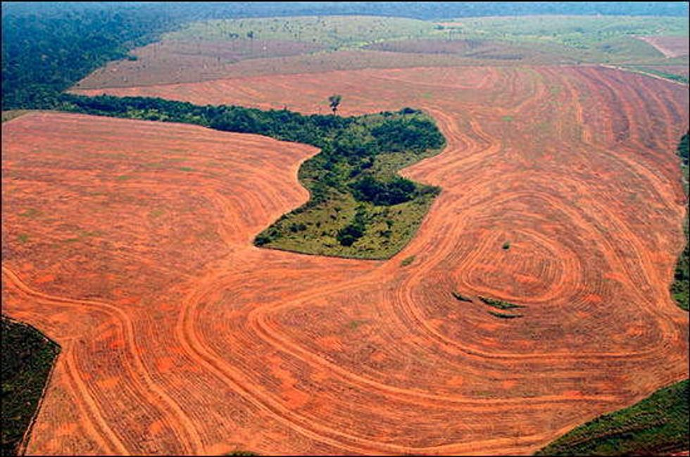 Brazil Senate Votes to Dismantle Amazon Deforestation Protections