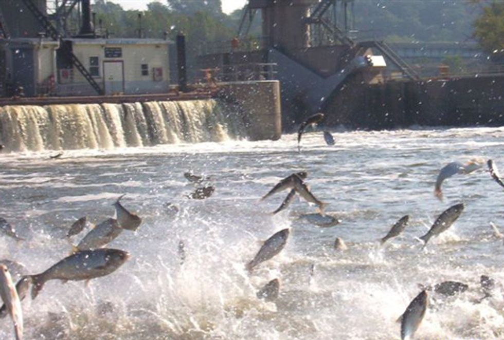 Act Now to Stop Asian Carp