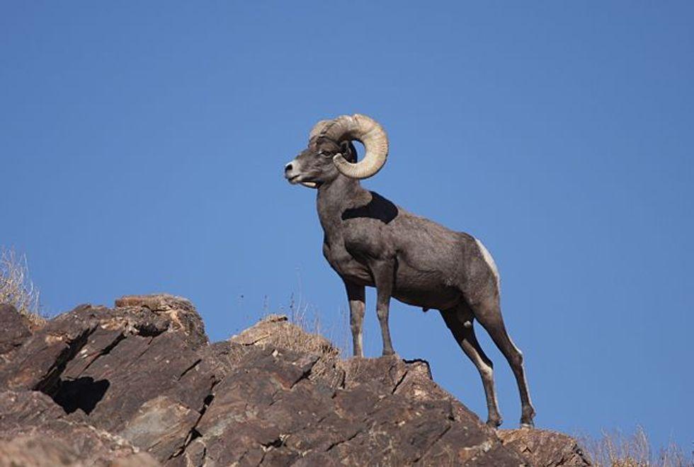 Tell Congress to Keep Anti-Wildlife Attacks off Funding Bills
