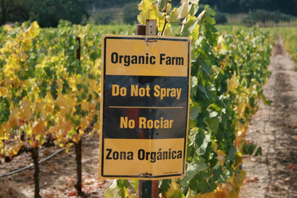 Startling Differences in Canadian Produce Pesticide Residue Levels