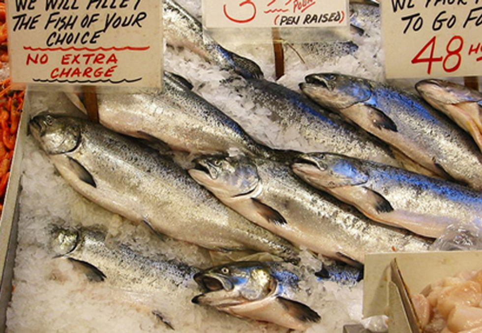 Virus Confirmed in AquaBounty's Genetically-Engineered Salmon