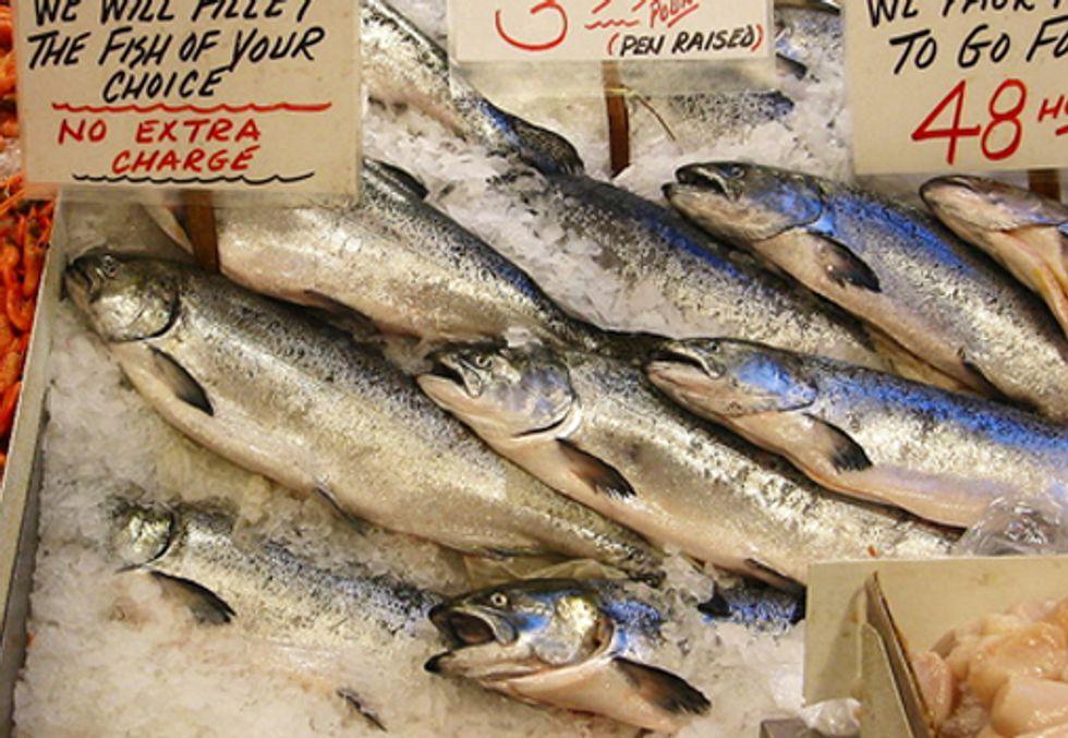 Virus Confirmed in AquaBounty's Genetically-Engineered Salmon