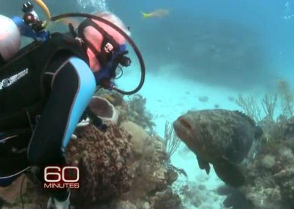 60 Minutes Highlights Assault on Planet's Reefs