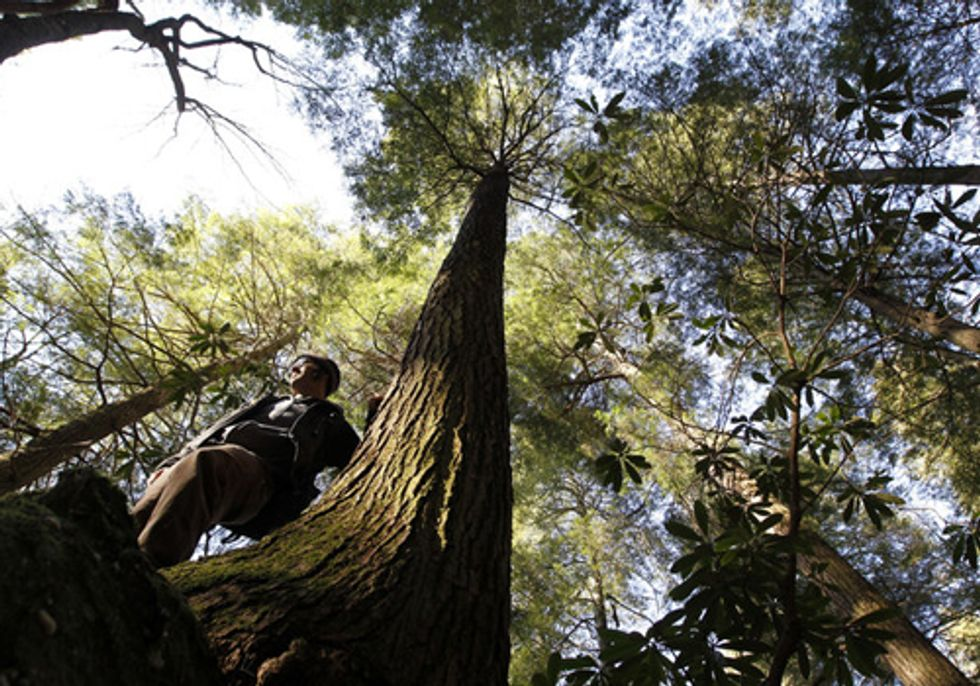 Burning Wood for Power Threatens Forests