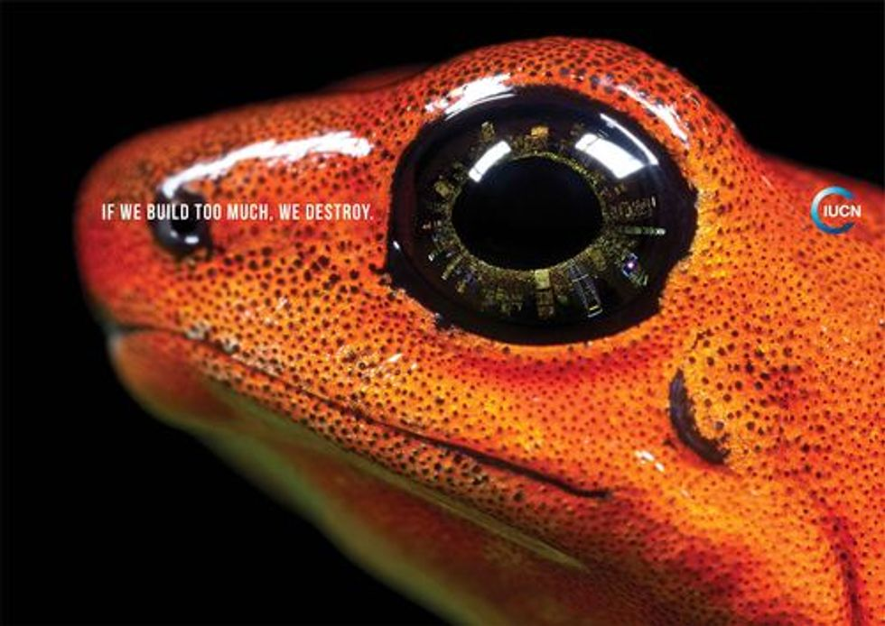 New Mobile App Features the Amazing World of Frogs