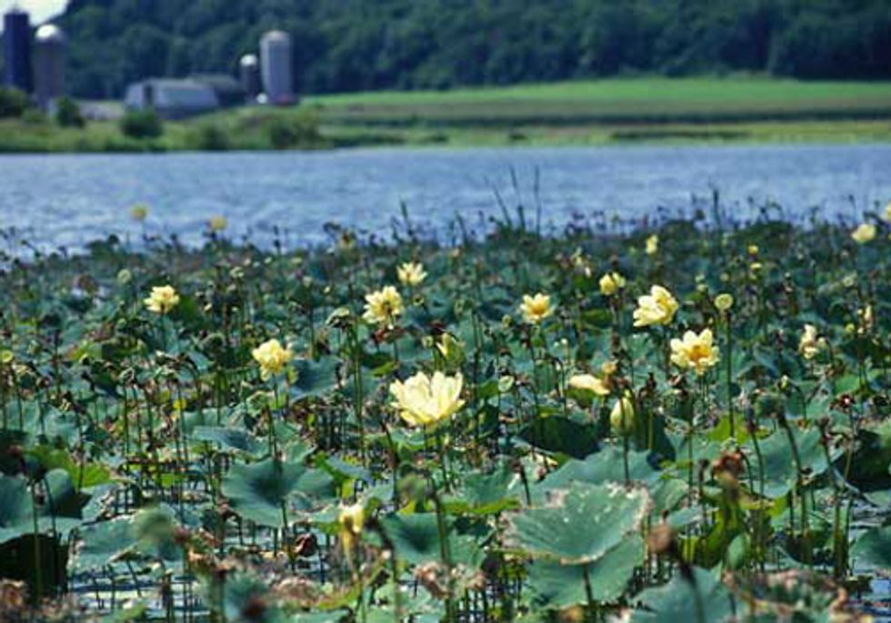 Program Rewards Farmers and Ranchers for Environmental Stewardship