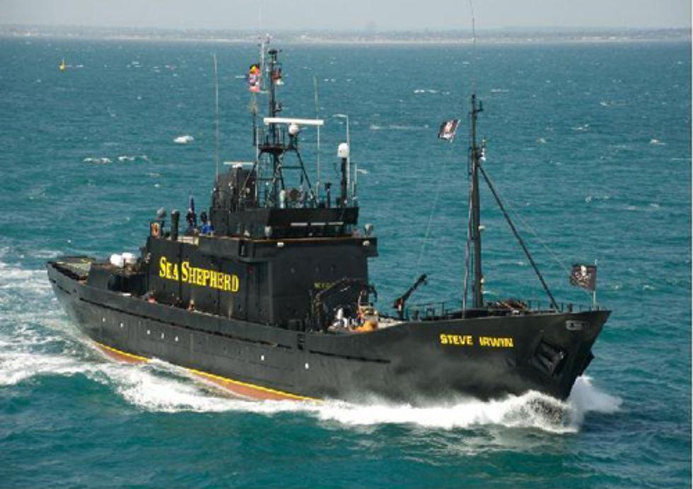 Japanese Police Harass Marine Wildlife Conservationists