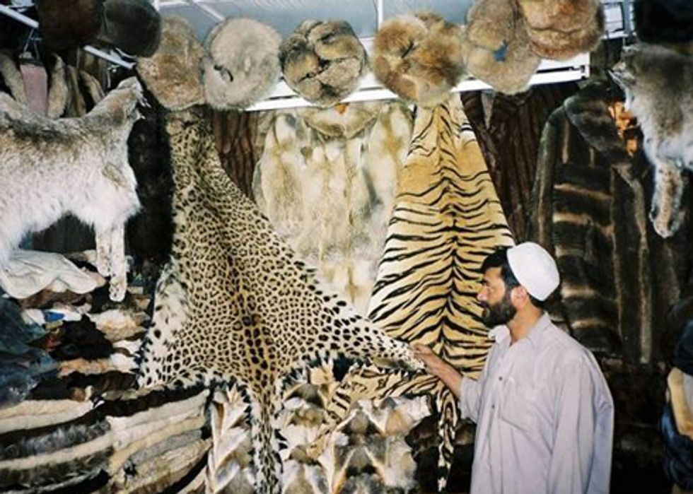 Video Highlights Consequences of Illegal Wildlife Trade for Military Personnel