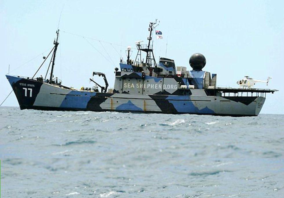 Sea Shepherd Intercepts Japanese Whaling Fleet with Drones