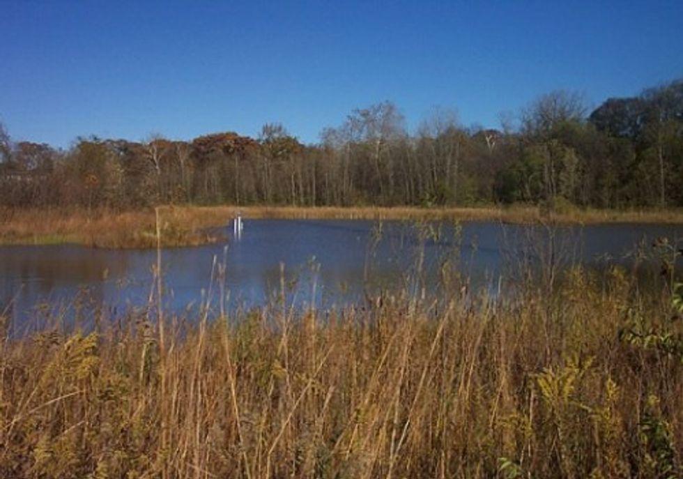 Sierra Club Granted Intervener Status in Ohio State Wetlands Hearing