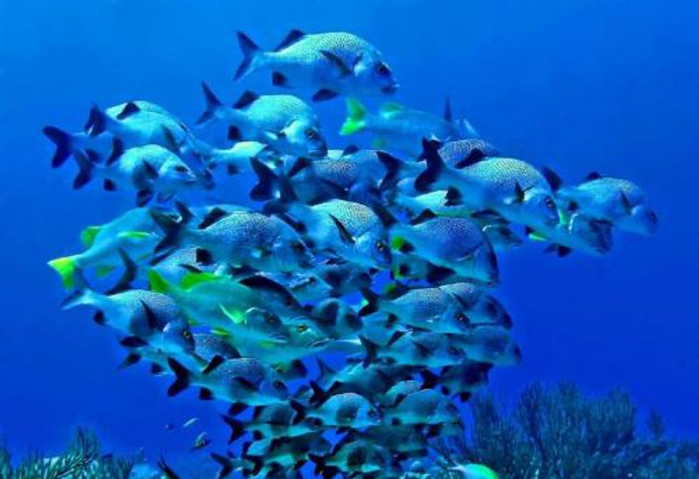 Protections Finalized for 132 Caribbean Fish Species